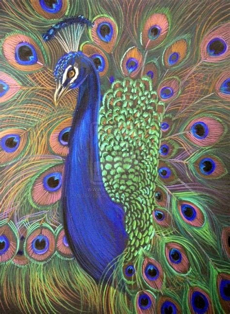 peacock images peacock prismacolor 2 by houseofchabrier on deviantart that s clever
