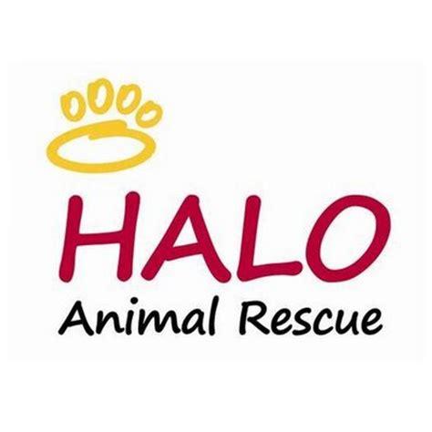 halo rescue halo animal rescue halorsq