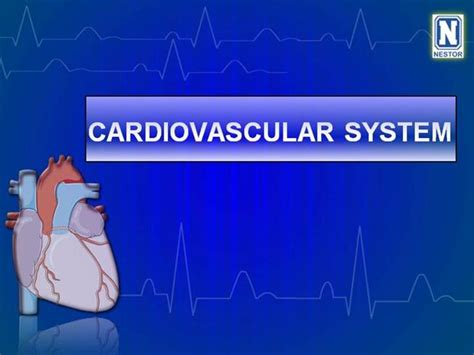 Cardiovascular System Authorstream Circulatory System Powerpoint