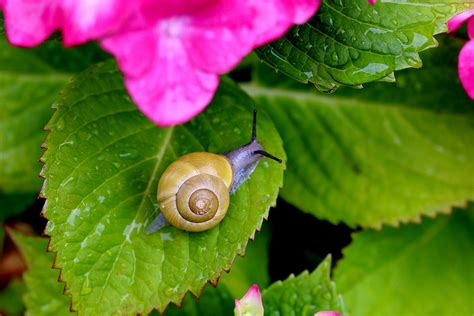 backyard pests every day home garden home improvement blog