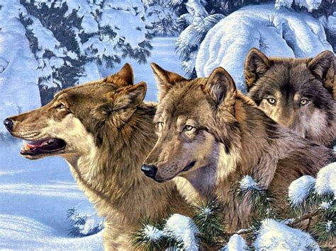 wolf s wolves images winter wolves hd wallpaper and background