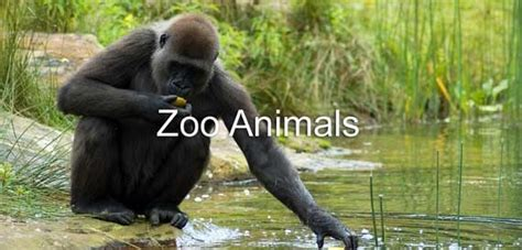 google images zoo animals zoo animals google search animals of all kinds pinterest