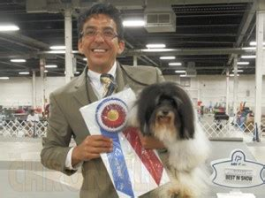 judith mcgrath havanese elm city kennel club wednesday august 21 2013 canine chronicle