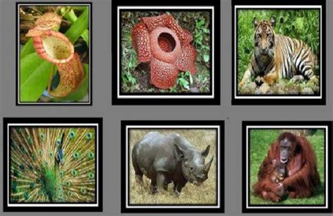 flora dan fauna indonesia ragam hewan dan tumbuhan langka di indonesia yang