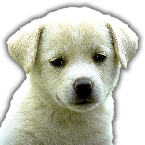 guess the breed guess the breed quiz co uk appstore for android