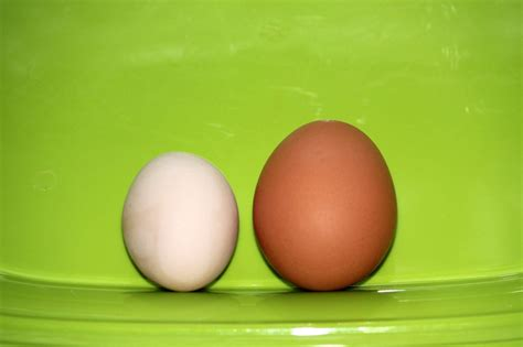 buff orpington egg color buff orpington egg color page 3