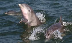 virginia aquarium dolphin watching boat trips virginia aquarium marine science center virginia is