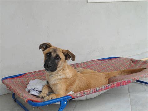 ricerca filiale da iban animali in libero stato novembre 2011