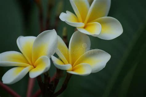 fiori esotici foto fiori esotici nel cipro fotografia stock immagine di