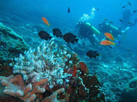 scuba diving scuba dive scuba diving