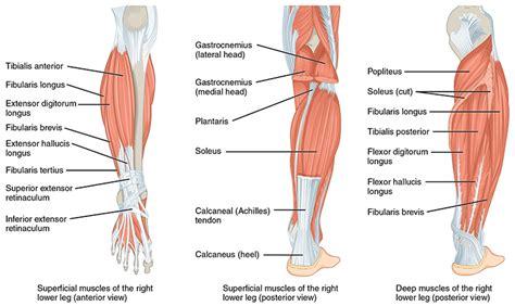 The Leg L by Print
