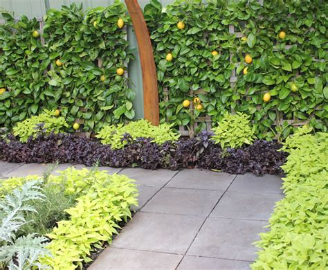 a persian carpet garden with espalier lemon pomegranate