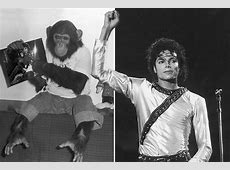 Michael Jackson's chimp Bubbles was 'beaten' while in his ... Jane Goodall Death