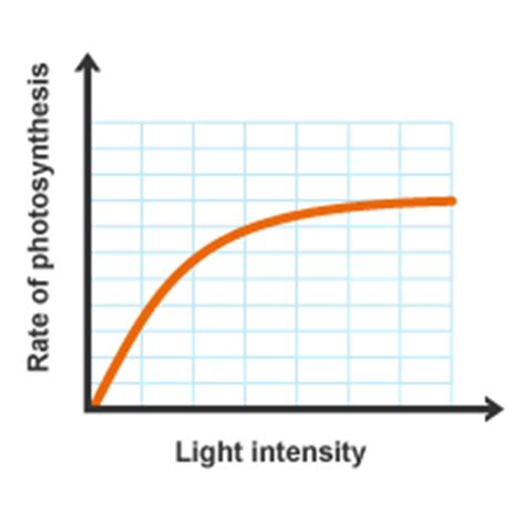 How Does Light Intensity Affect Photosynthesis by Intermediate 2 Bitesize Biology Photosynthesis