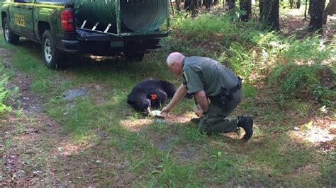 bear   providence captured  released wjar