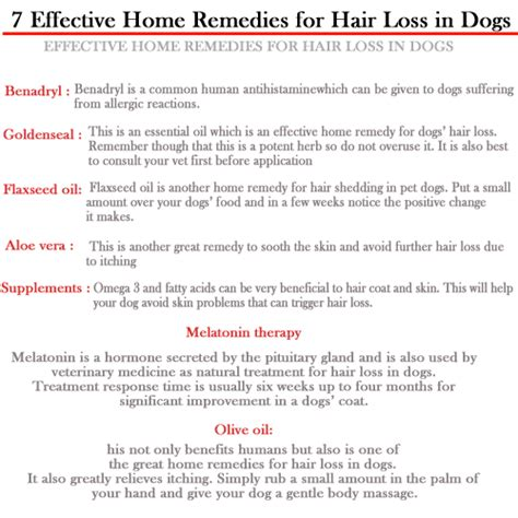 Home Remedys For Dogs Losing Hair | hair loss help