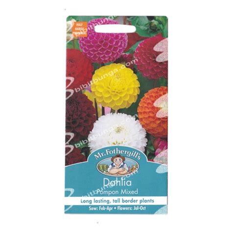 Biji Bunga Dahlia Mixed benih dahlia pompon mixed 50 biji mr fothergills