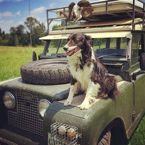 land rover setter dog 109 best images about land rover n friends on pinterest