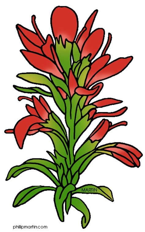 coloring page indian paintbrush page of wyoming clip art clipart panda free clipart