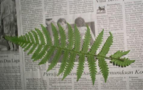 cara membuat zpt tumbuhan yuk membuat herbarium baligadang s blog