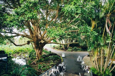 Botanic Gardens Restaurant Best Cafes Hidden City Secrets Botanic Gardens Cafe