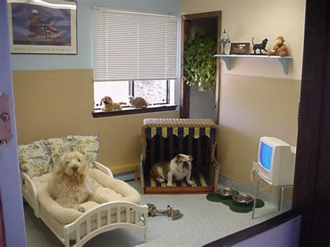 pet room ideas 7 absolutely brilliant steps to a pet friendly home
