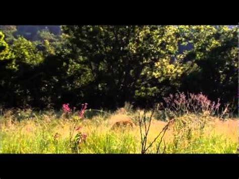 white lion film youtube white lion movie part 1 youtube