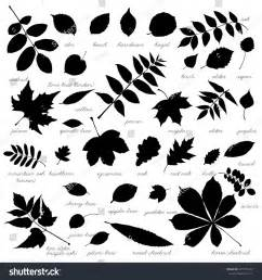 silhouettes tree leaves elm beech ash stock vector