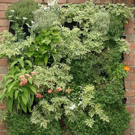 vertical vegetable garden kits do it yourself archives page 2 of 3 living walls and