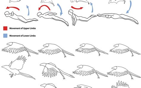how to your bird flying bird animation cycle www imgkid the image kid has it