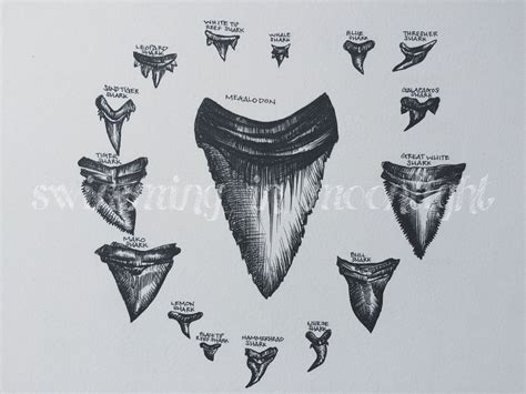 shark tooth tattoo shark tooth mandala archival print sharks