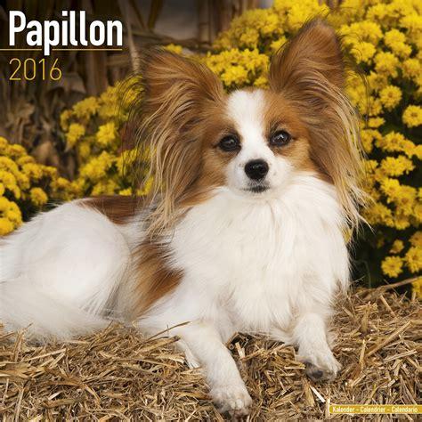 papillon price papillon calendar 2016 pet prints inc