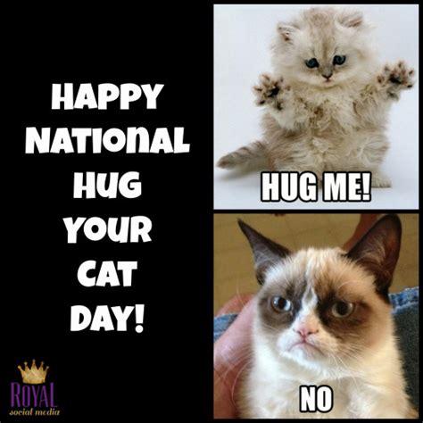 Cat Hug Meme - royal social media