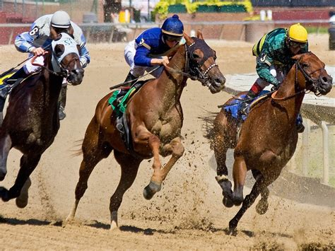 Win Money Horse Racing - horse race betting all way looooong freewinningbets com