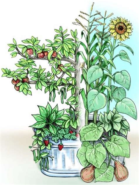 vegetable garden what to plant together 100 vegetable garden what to plant together