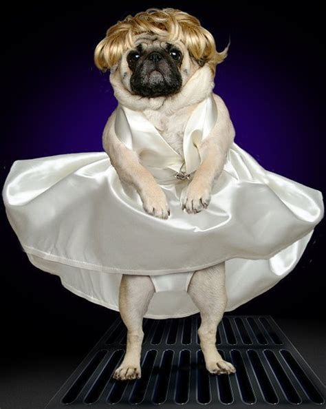pug costumes 20 poor pugs in costumes screen junkies