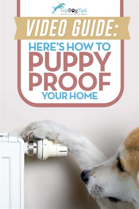 puppy proofing how to puppy proof your home important tips on what you need to do