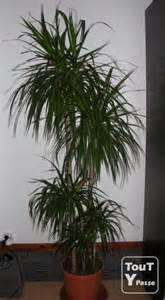 plantes d int 233 rieur 1m80 de haut 2 diff 233 rentes colmar 68000