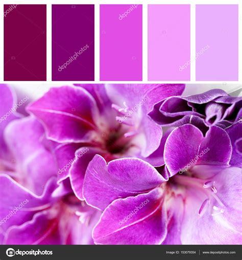 i fiori corrispondenze fiori di corrispondenza e bellissimo colore lilla foto
