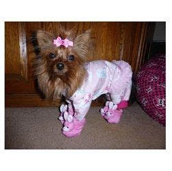 yorkie slippers yorkie yazmin completes here nighttime look with adorable