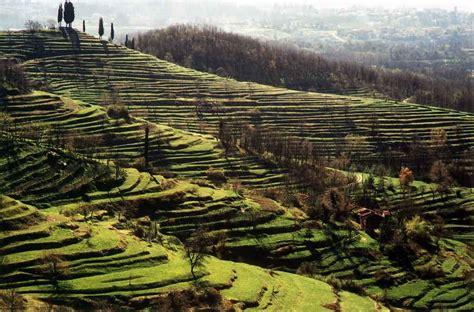 terrazzamenti in collina parco di montevecchia progetti valorizzazione