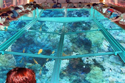 glass bottom boat tour glass bottom boat excursion and sea trips in hurghada
