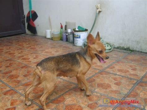 Jual Kandang Pagar Anjing Surabaya dunia anjing jual anjing lainnya mix breed mix breed