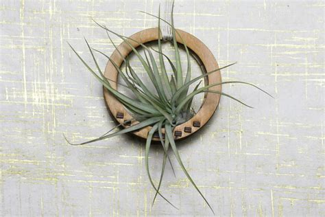 air plant wall holder circular air plant holder air plant hanger air plant boho