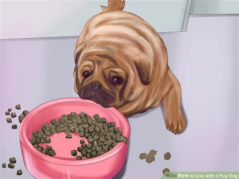 pug puppy food amount 5 ways to live with a pug wikihow