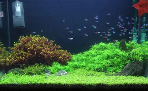 aquascaping planted tank aquariums on pinterest planted aquarium aquascaping and tanks