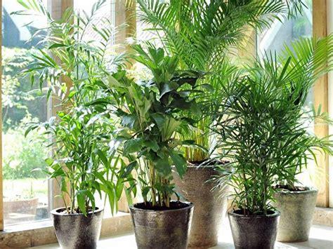 Palmen Im Garten Pflanzen 3151 by Palmen Als Zimmerpflanzen Sorten Standort Pflege