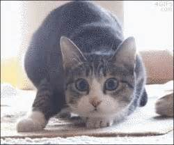 Cat Meme Gif - excited cat gifs find share on giphy