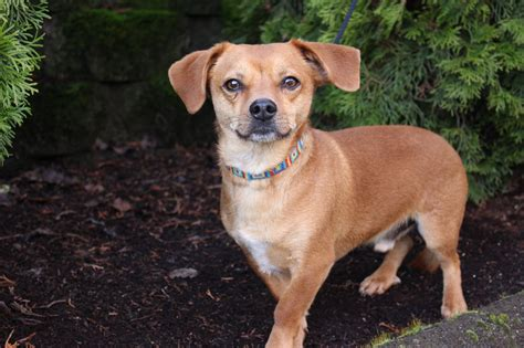 oregon rescue pet talk find the of your this s day oregonlive