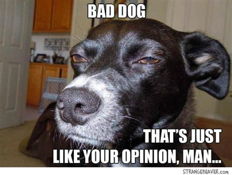 Stoned Dogs Meme - best of the stoned dog meme strange beaver